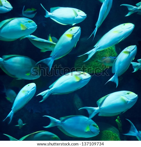 Underwater world. Photo of a tropical fish - stock photo