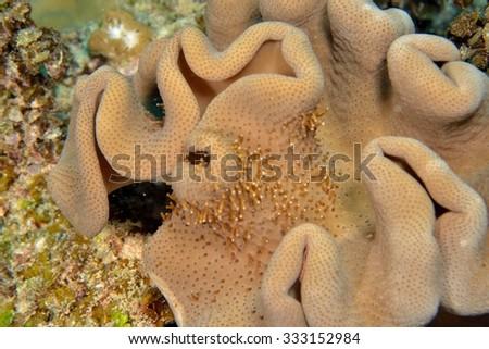 underwaterr coral reef - stock photo