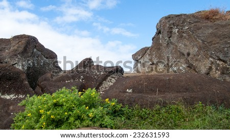 Unfinished moai at the top of Rano Raraku volcano, inside the crater.