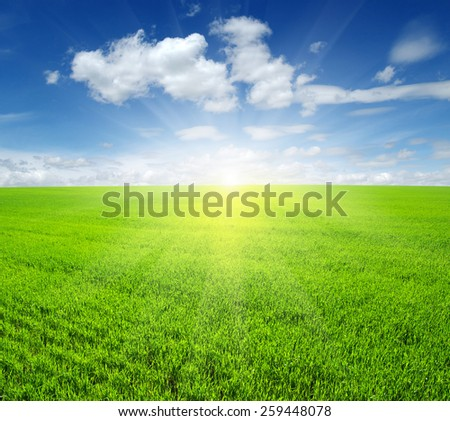 unfocused Green field,blue sky and sun.