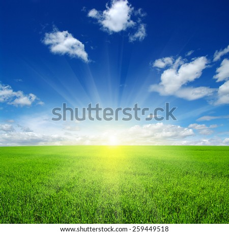 unfocused Green field,blue sky and sun.  - stock photo