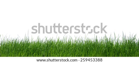 unfocused green grass on white background  - stock photo