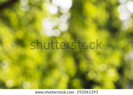 Unfocused leaves