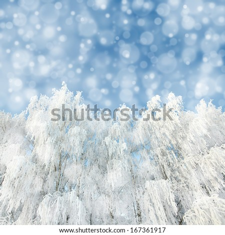 unfocussed snowfall and winter woods background