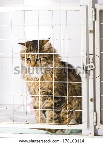Unhappy cat in an animal shelter, waiting for a home  - stock photo