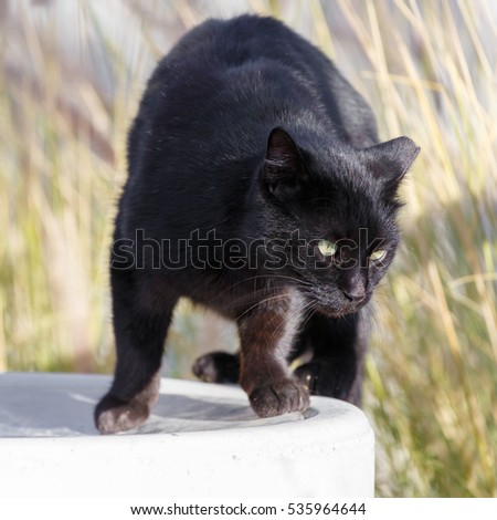 Unhappy homeless black cat standing on a garbage can