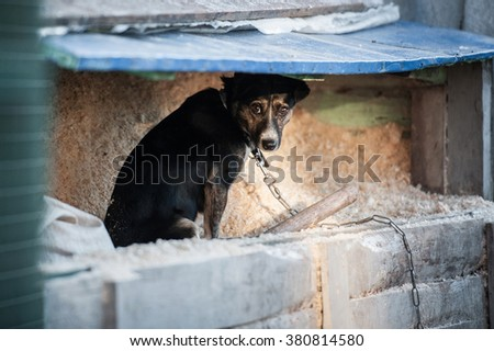 Unhappy homeless dog in dog shelter  - stock photo
