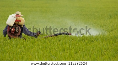 Unidentified farmer spraying chemical on a paddy field in Sekinchan, Malaysia - stock photo