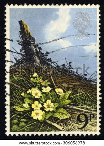 UNITED KINGDOM - CIRCA 1979: A stamp printed in the United Kingdom shows dedicates to British Flowers, shows Primrose, circa 1979 - stock photo