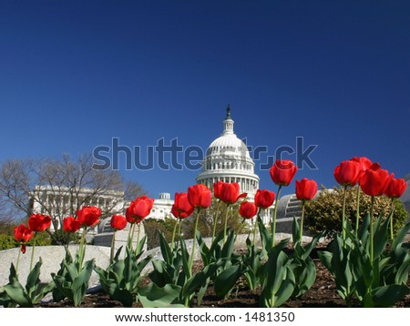 United States Capitol in the Spring with tulips blooming in front