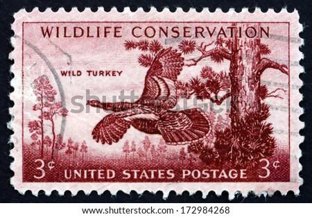 UNITED STATES OF AMERICA - CIRCA 1956: a stamp printed in the USA shows Wild Turkey, Meleagris Gallopavo, Bird, Wildlife Conservation, circa 1956 - stock photo