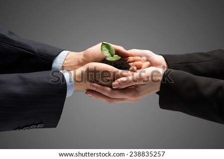 Unity of businesspeople protecting small sprout with hands