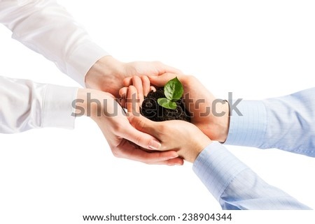 Unity of businesspeople protecting small sprout with hands - stock photo