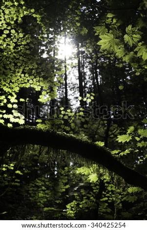 University of British Columbia Endowment Lands - stock photo