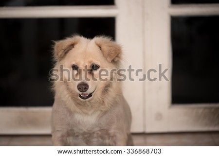 Unknown breed beige color stray dog.