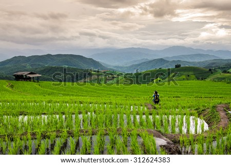 Unknown Photographer take a photo of Green Terraced Fields with Cloudy