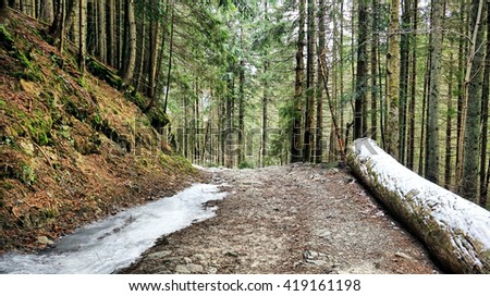 Unknown Trail in Winter Forest