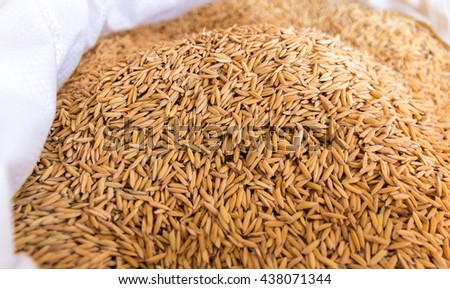 Unmilled rice in burlap with selective focus.  - stock photo