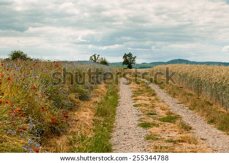 Unpaved Country Road through the Wheat Fields in Summer - stock photo