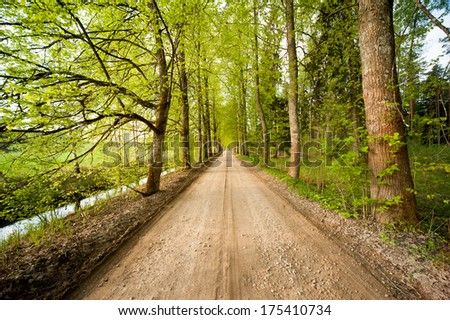 Unpaved road in the forest