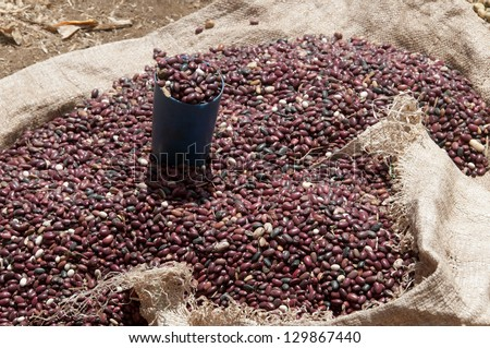 unroasted coffee beans - stock photo