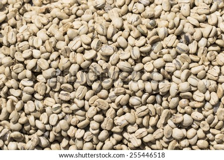 unroasted green coffee beans - stock photo
