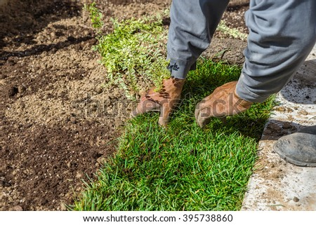 Unrolling grass turf rolls for a new lawn - stock photo