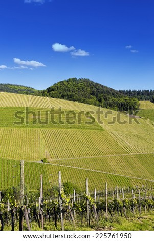 Unspoilt green vineyard landscape against blue sky on a sunny summer day