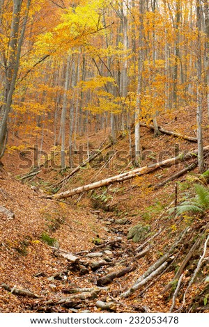 Untouched mountain forest in autumn - stock photo