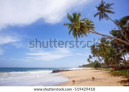 Untouched tropical beach of Sri Lanka. Akurala beach.