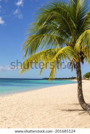 Untouched tropical beach with tall palm tree  entering the ocean - stock photo