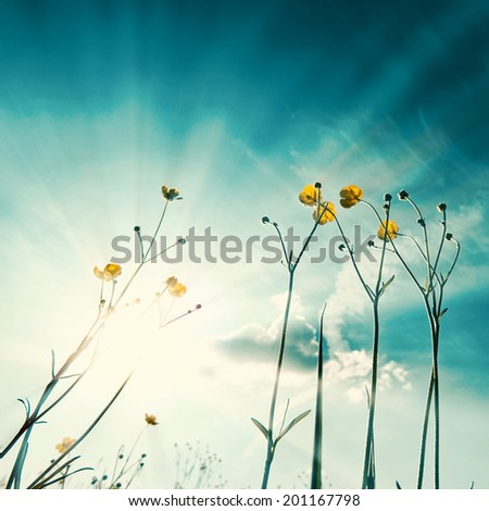 Unusual abstract nature background, template for design - stock photo