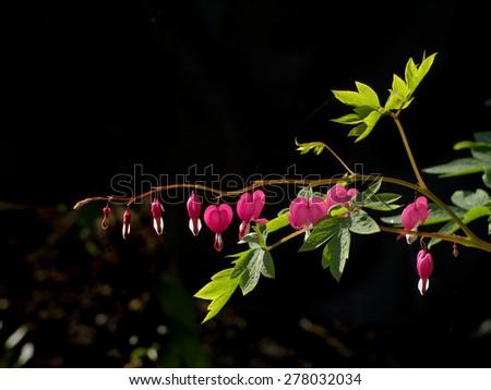 unusual bright flower on a dark background - stock photo