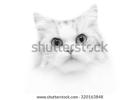 Unusual close-up black and white cat portrait, shallow DOF - stock photo