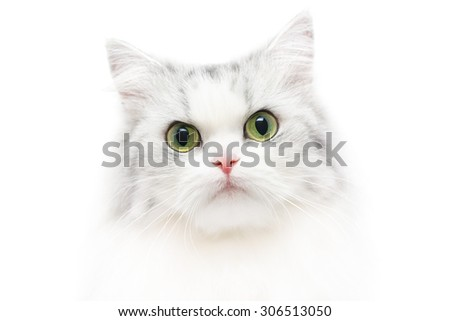Unusual close-up cat portrait, white background, shallow DOF - stock photo