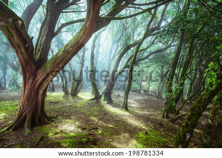 unusual forest - stock photo