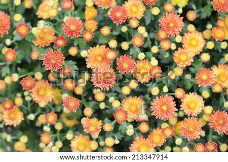 Unusual tender abstract flower background - stock photo