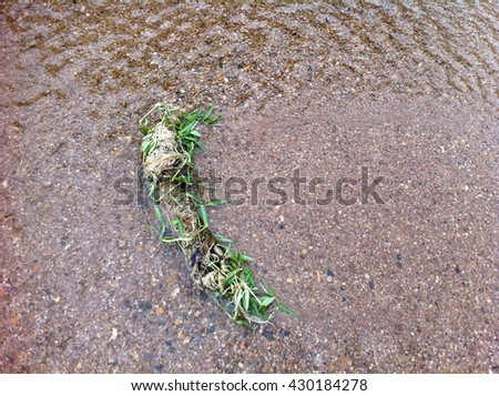 Unwanted flora in the water.  - stock photo