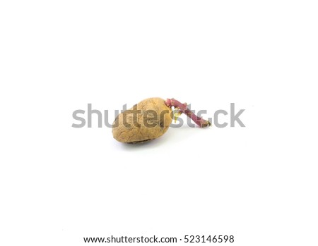 Unwashed and germinated potatoes, isolated on a white background