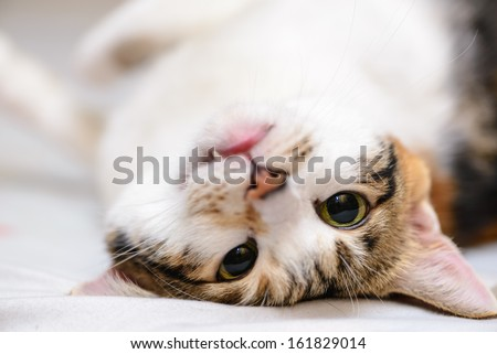 Up side down sleepy cat - stock photo