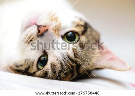 Up side down sleepy cat - stock photo