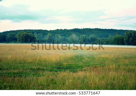 Upcoming fog over the green field, forest background