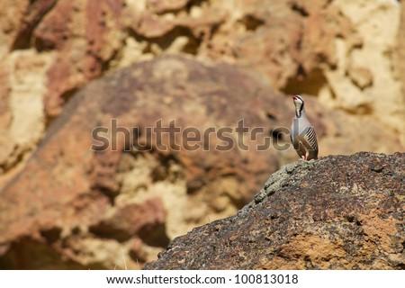 Upland bird hunting - stock photo