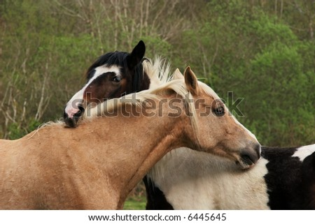 Upper bodies of two horses, one brown and one black and white,  with their heads resting on each other in a gesture of love and friendship.