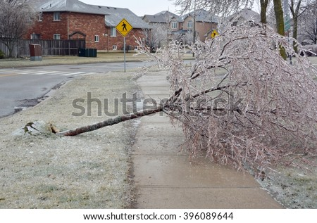 uprooted tree caused by ice rain laying across a sidewalk in a residential area