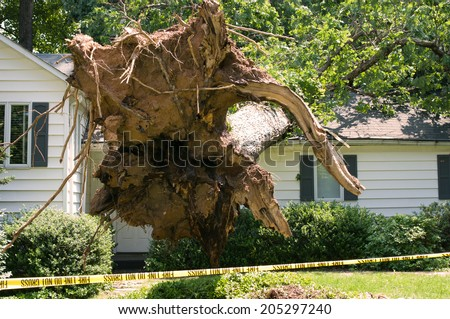Uprooted tree fell on a house after a serious storm came through - stock photo