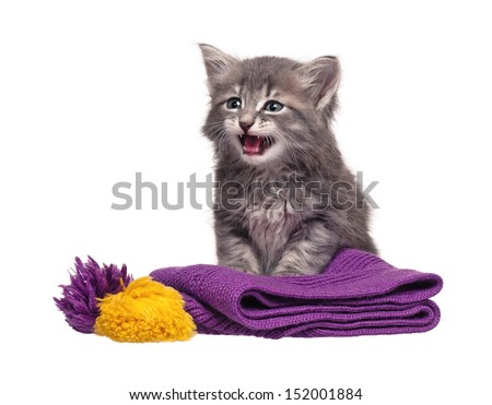 Upset kitten  on a knitted scarf isolated on white background