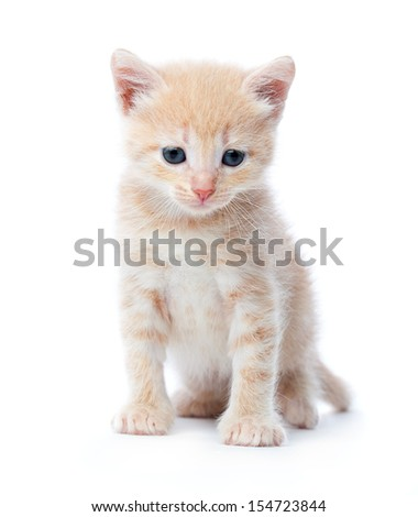 Upset red-haired kitten. Isolated on white background
