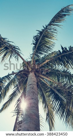 Upview Coconut tree under blue sky with sun flare, pastel style - stock photo