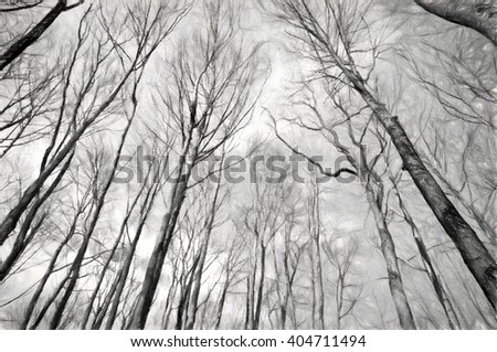 upward trees monochrome  - stock photo